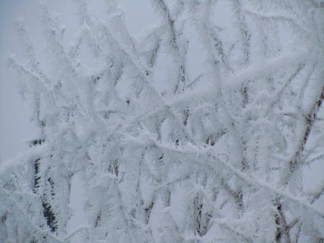 Eiswein Weingarten Eis Kristall Winter